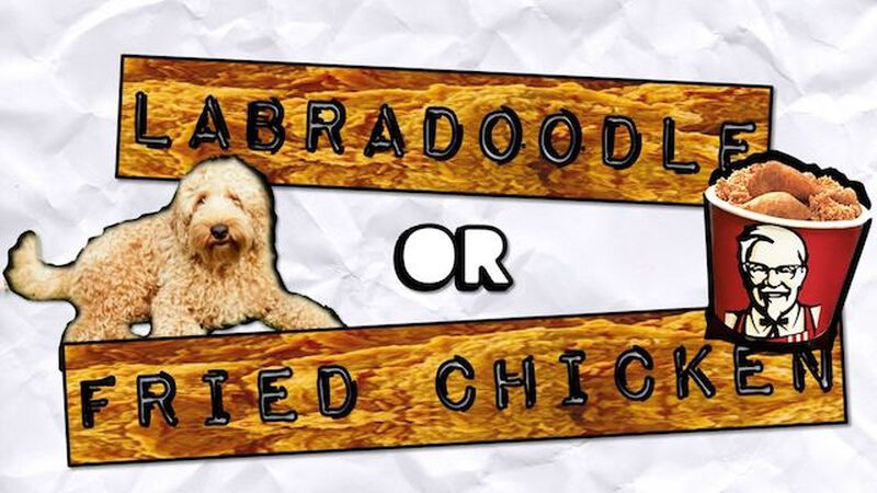 Labradoodle or Fried Chicken