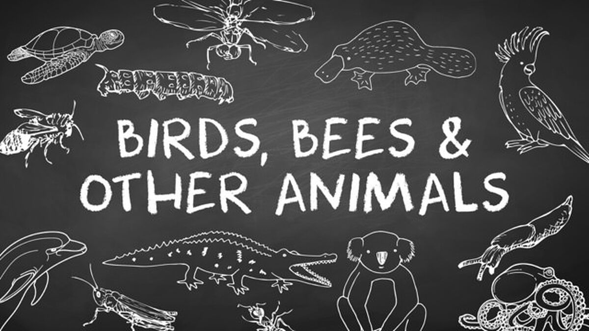 Birds, Bees, & Other Animals Vol 1 image number null