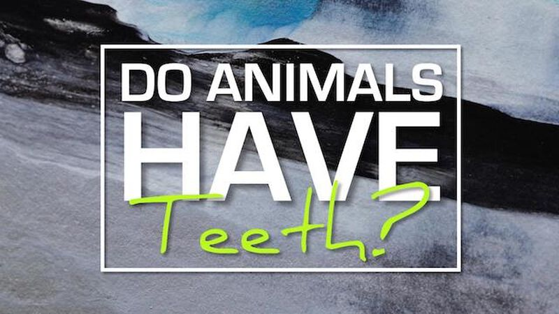 Do Animals Have Teeth