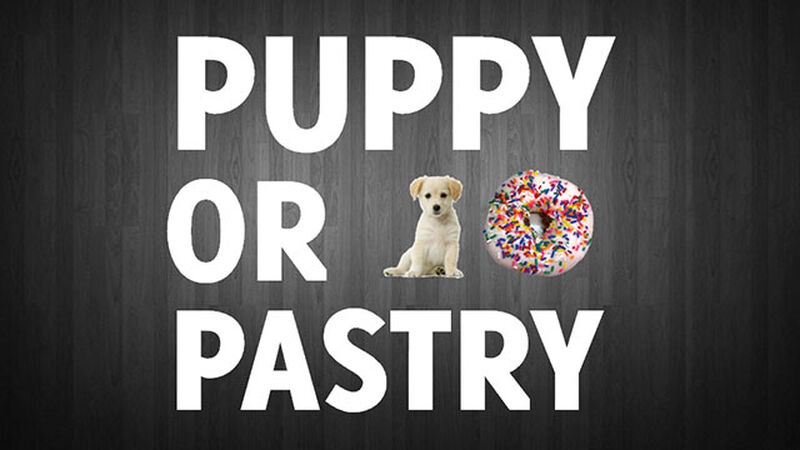 Puppy or Pastry?