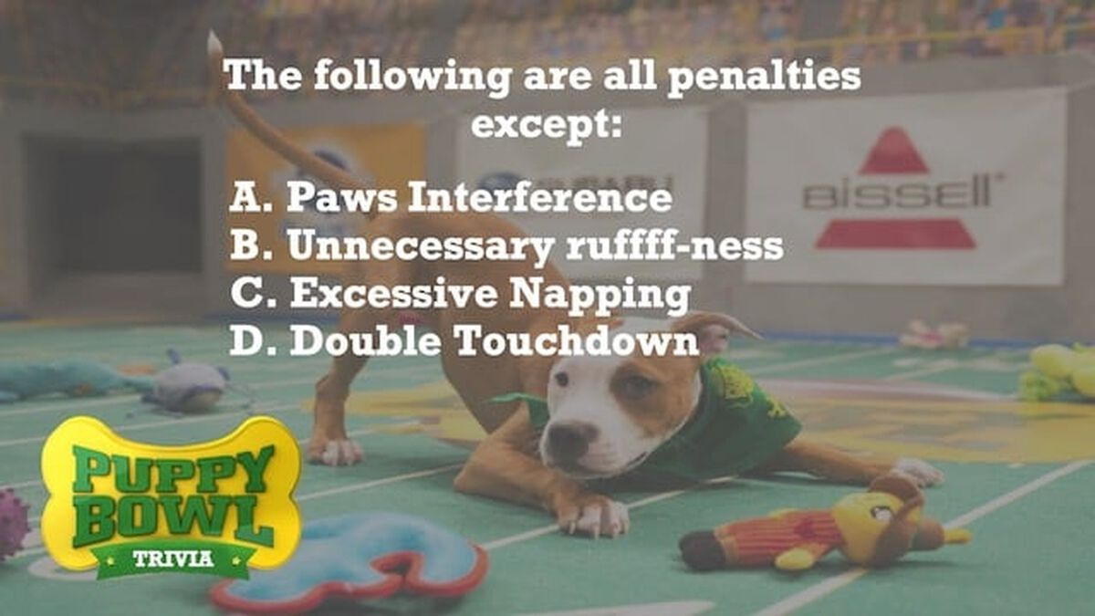 Puppy Bowl Trivia image number null