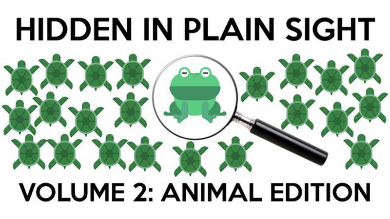 Hidden in Plain Sight 2: Animal Edition