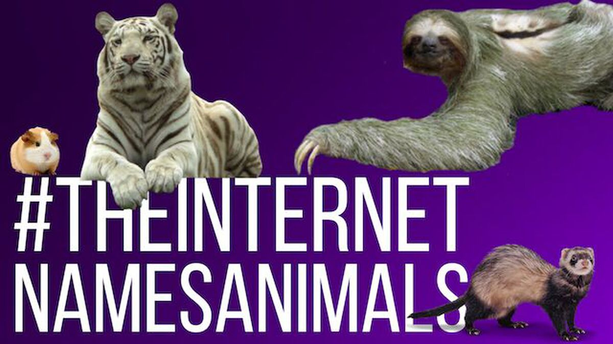 The Internet Names Animals: Volume 1 image number null