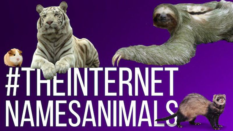 The Internet Names Animals: Volume 1