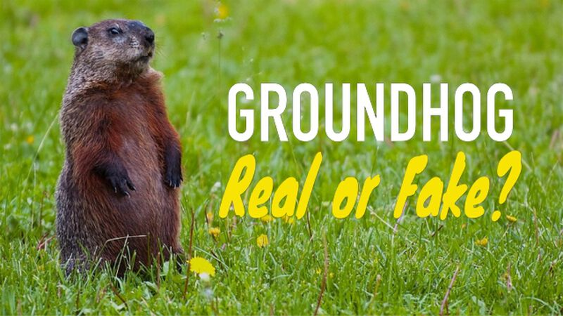 Groundhog Real or Fake?