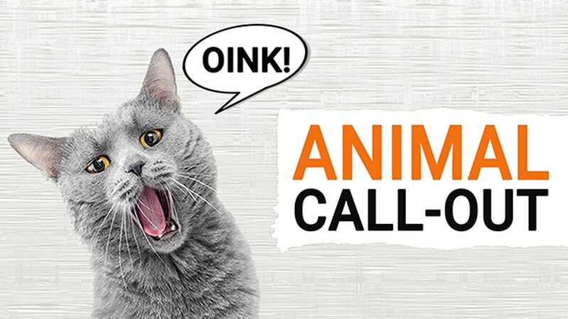 Animal Call-Out