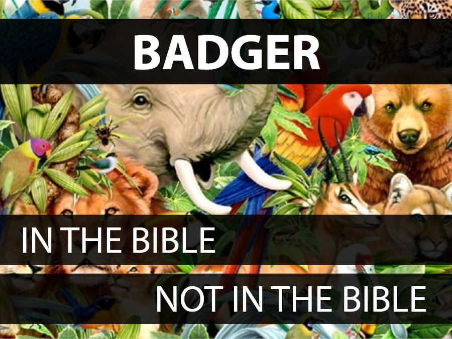 Animals in the Bible: Volume 2 image number null