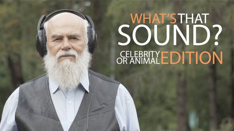 What's That Sound: Celebrity Edition