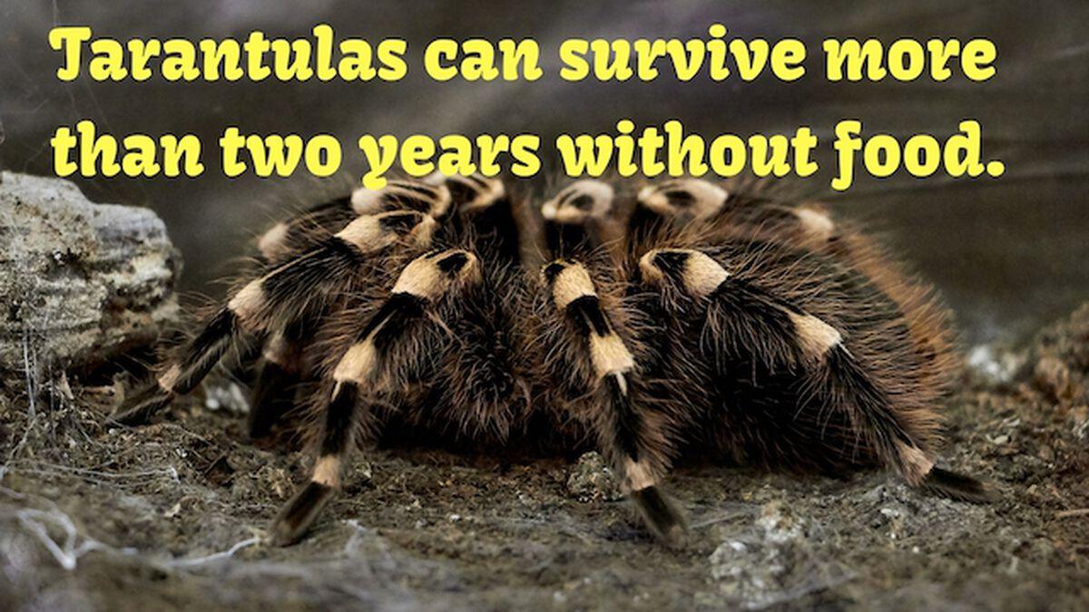 Amazing Animals Volume 1 image number null
