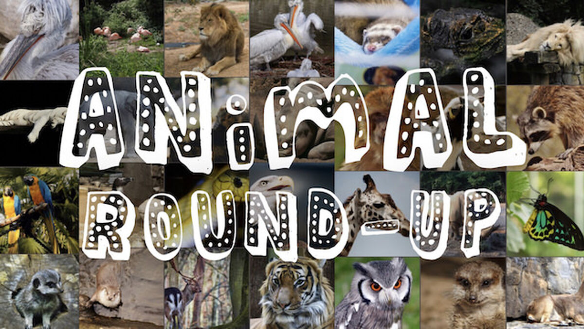Animal Round-Up image number null