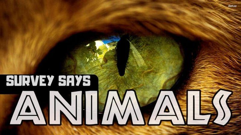 Survey Says Animals