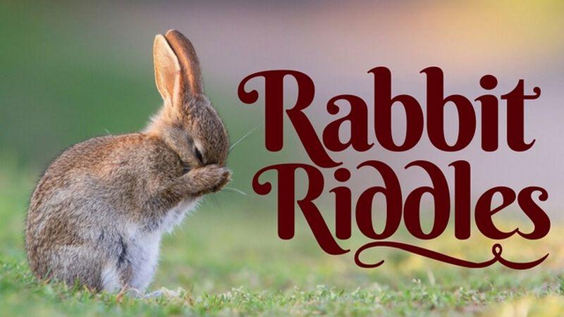 Rabbit Riddles