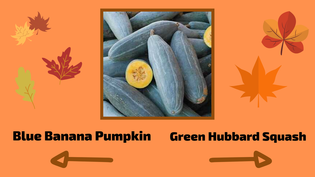 Are You Good with Gourds? image number null