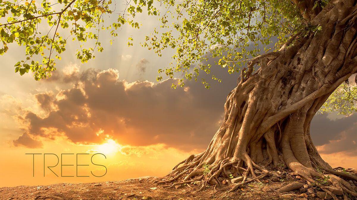 VIVA: Trees image number null