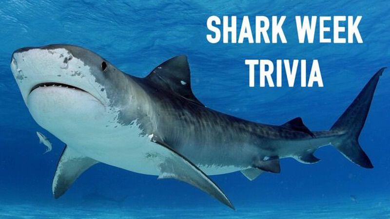 Shark Week Trivia