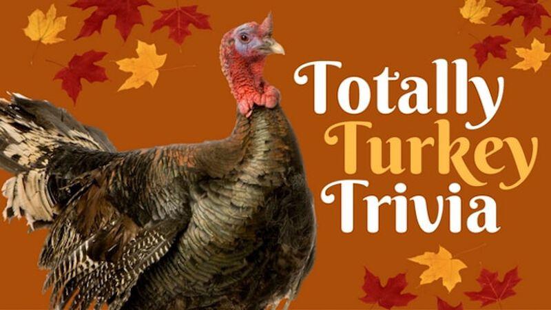 Totally Turkey Trivia