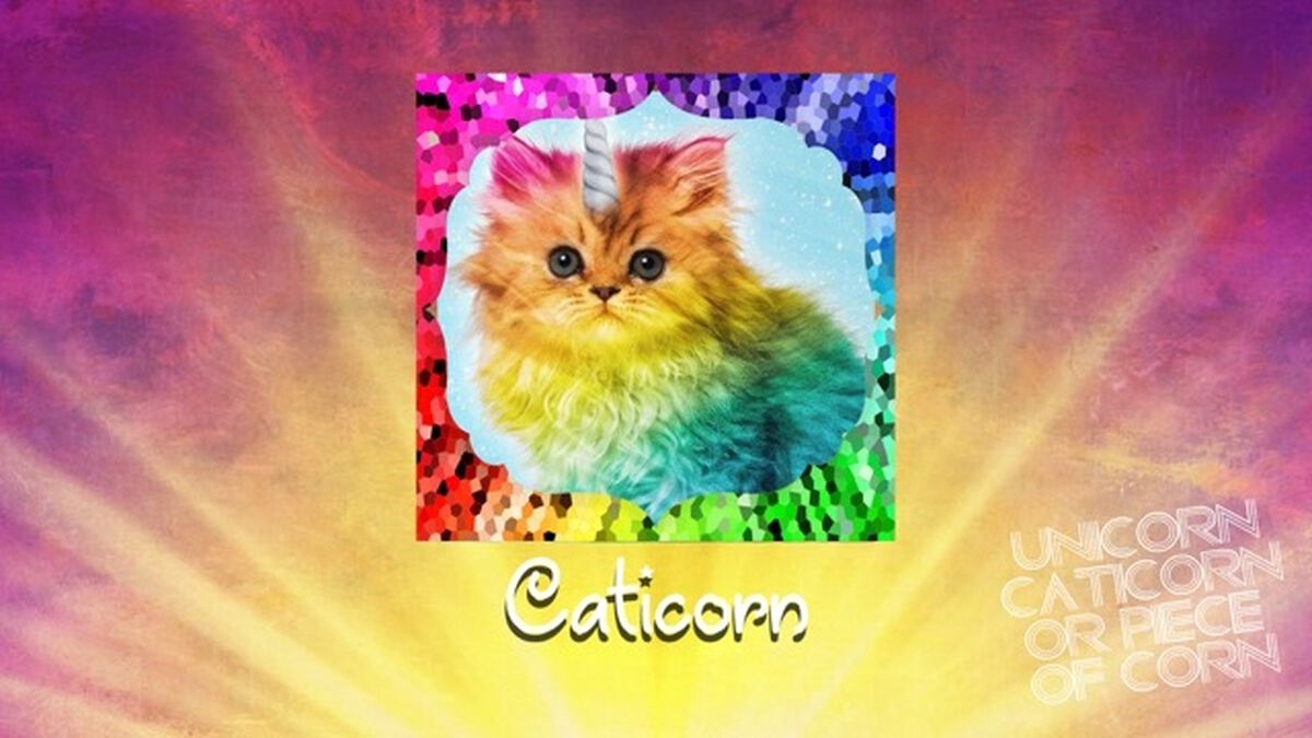 Unicorn, Caticorn, or Piece of Corn? image number null