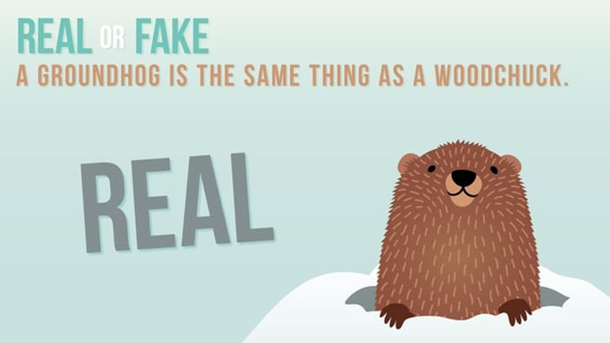 REAL OR FAKE: Groundhog Day Edition image number null