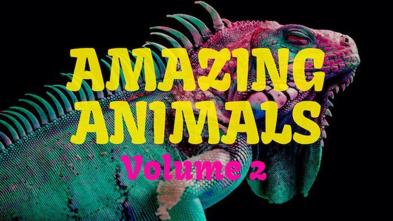 Amazing Animals Volume Two