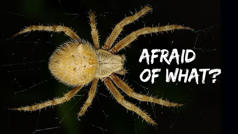 Afraid Of What?