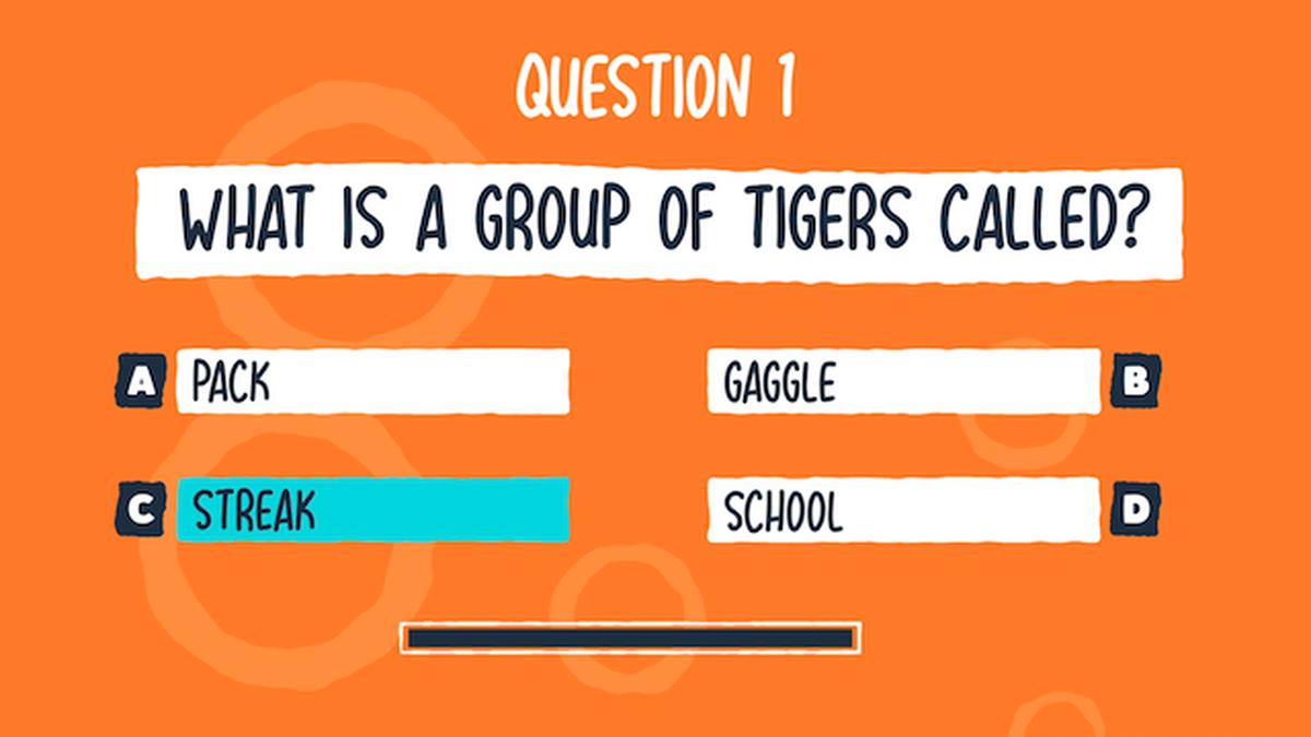 Big Cat Trivia Video Bundle image number null