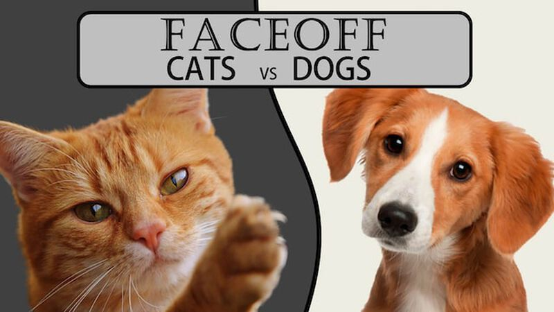 FACEOFF: Cats vs. Dogs