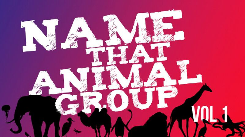 Name That Animal Group Vol 1