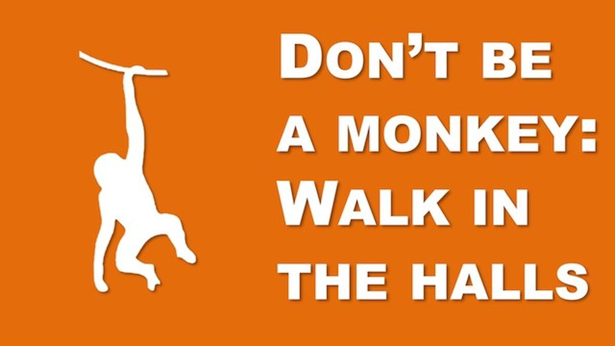 Don't Be a Monkey Rule Videos image number null