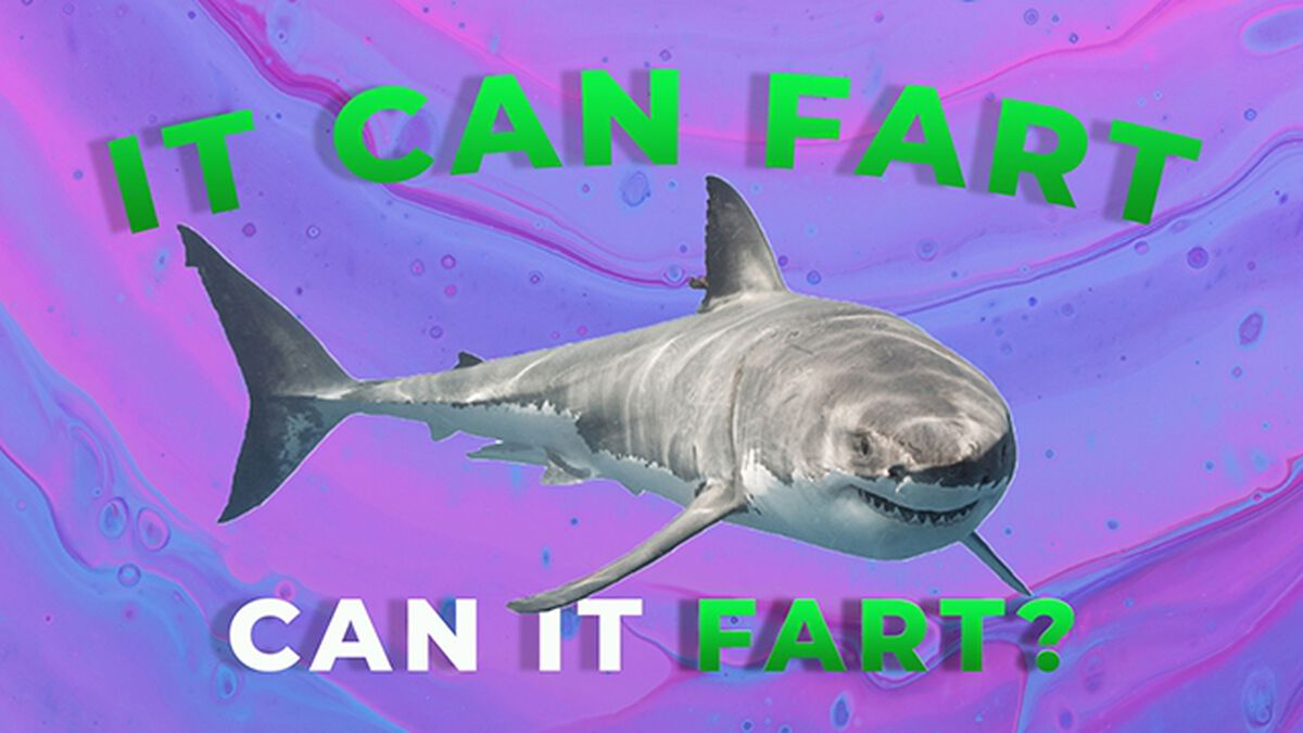 Can It Fart Number 2 image number null