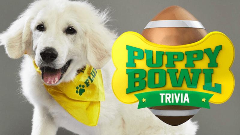Puppy Bowl Trivia