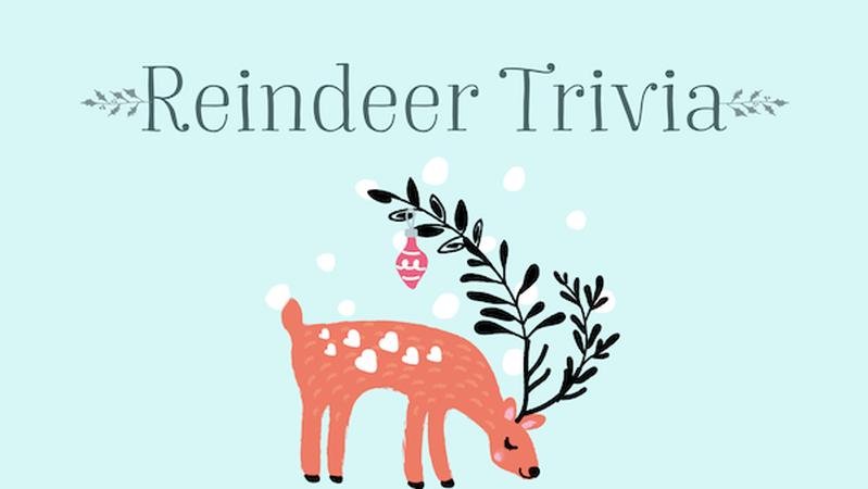 Reindeer Trivia