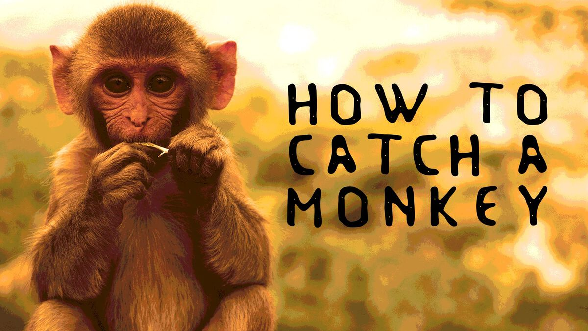 How to Catch a Monkey image number null
