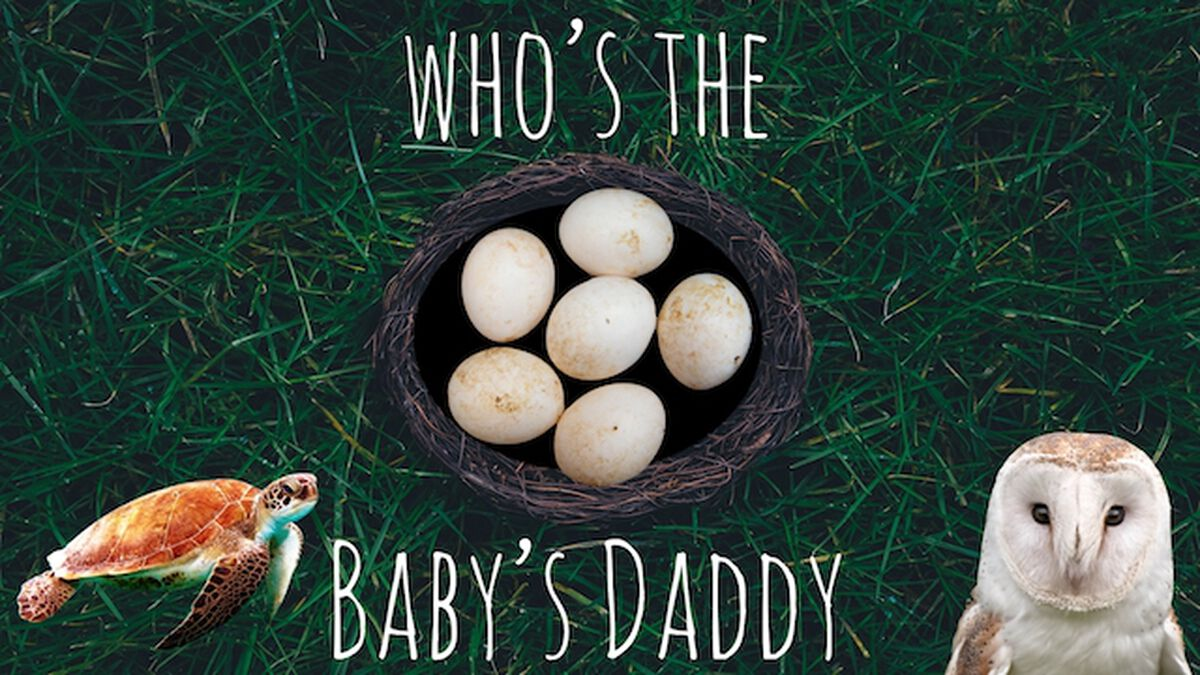 Who's the Baby Daddy? image number null