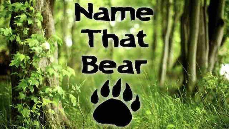 Name That Bear