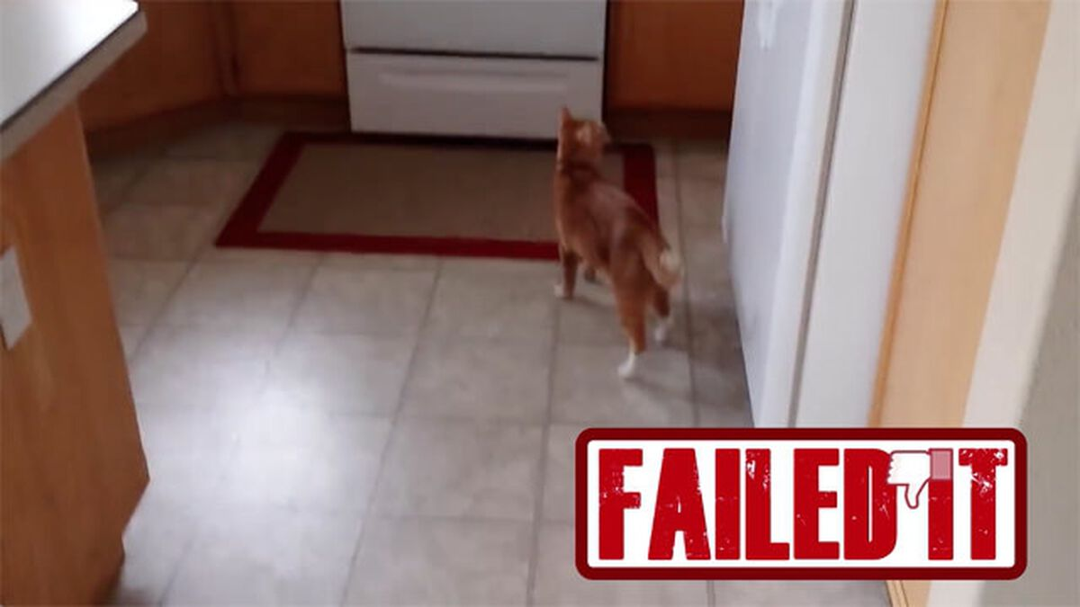 Nailed or Failed: Cat Edition image number null