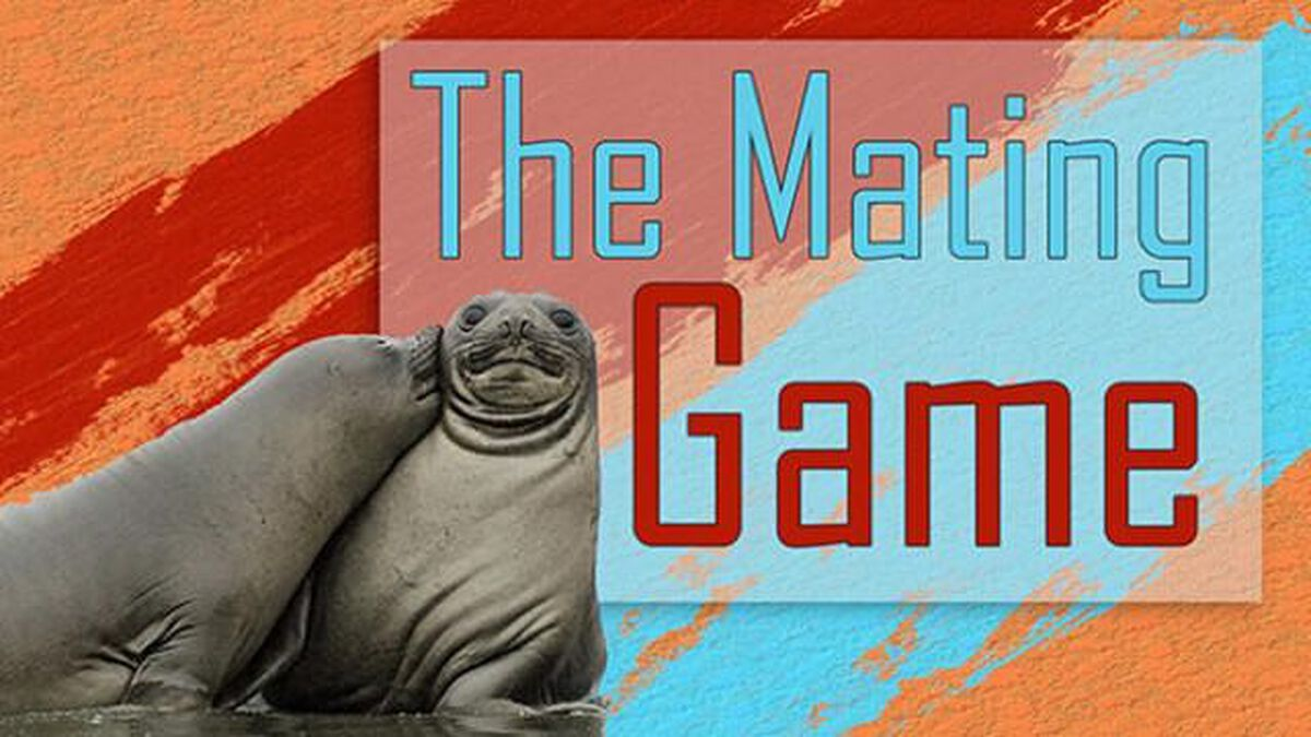 The Mating Game image number null