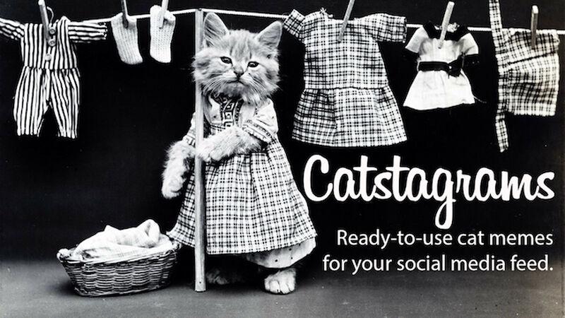 CATstagrams