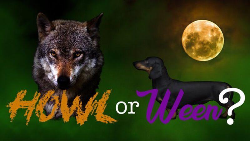 Howl or Ween