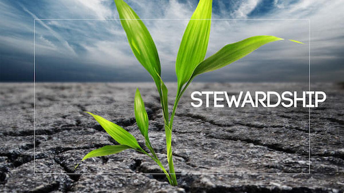 Viva: Stewardship image number null
