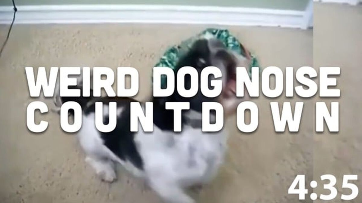 Weird Dogs Countdown image number null