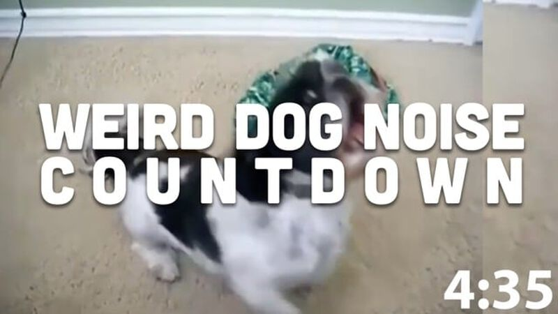 Weird Dogs Countdown