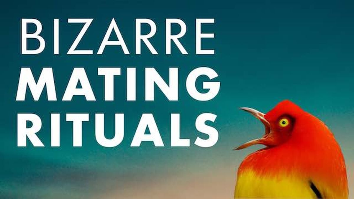 Bizarre Mating Rituals image number null