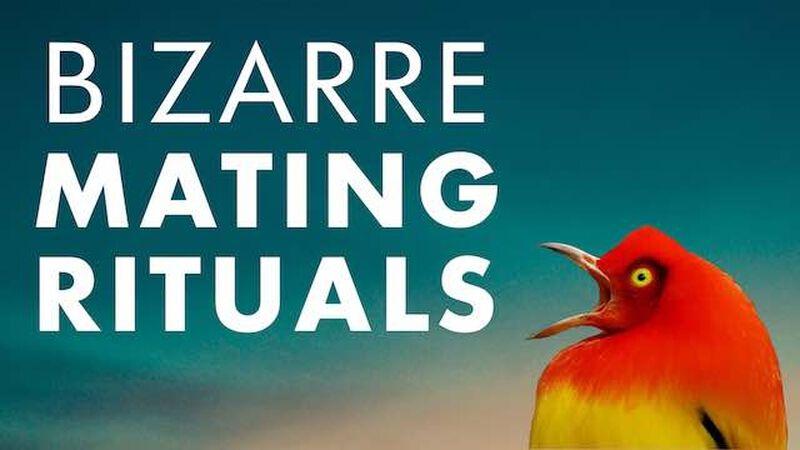 Bizarre Mating Rituals