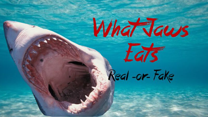 What Jaws Eats