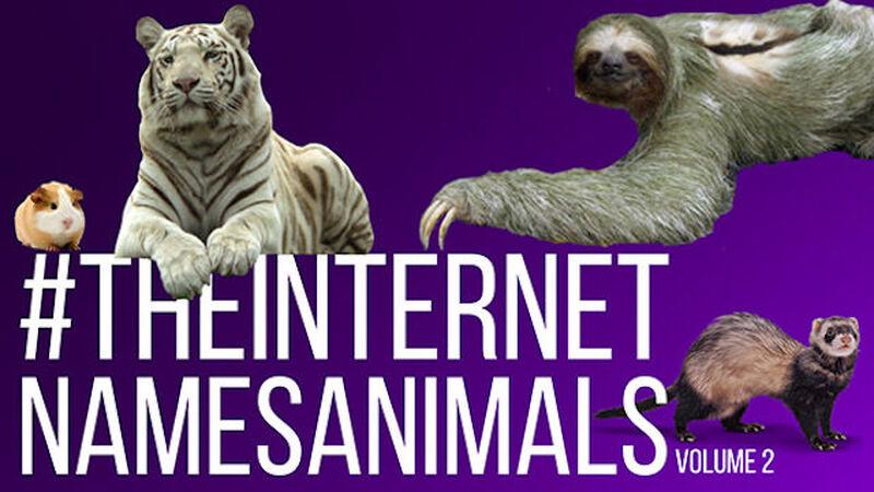 The Internet Names Animals: Volume 2