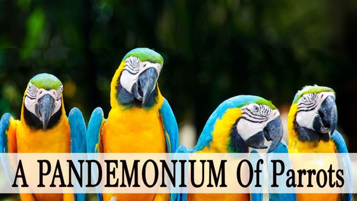 A Pandemonium Of Parrots image number null