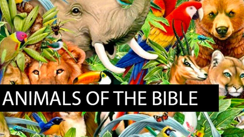 Animals of the Bible: Volume 1