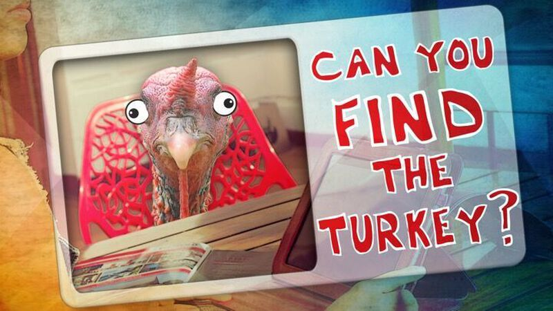 Can You Find the Turkey?