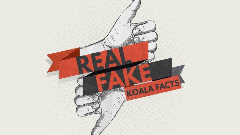 Real/Fake - Koala Facts