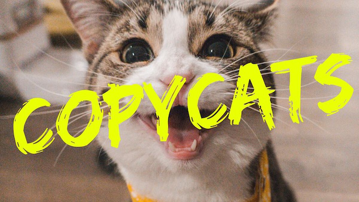 CopyCats image number null